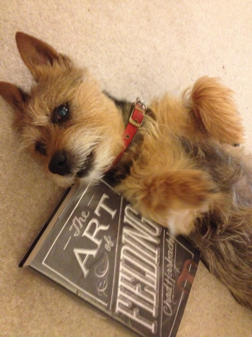 Attention seeking dog does not approve of this book taking the attention away from her and so attempts to distract me.