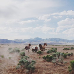 "ramblingally:  ""Wild horses…"""