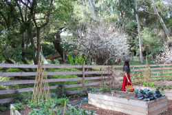 ediblegardensla:  Spending the morning with Shiva Rose, planting her summer garden together.  We are planting shelling beans, basil, tomatoes, cucumbers, melons okra and peppers.