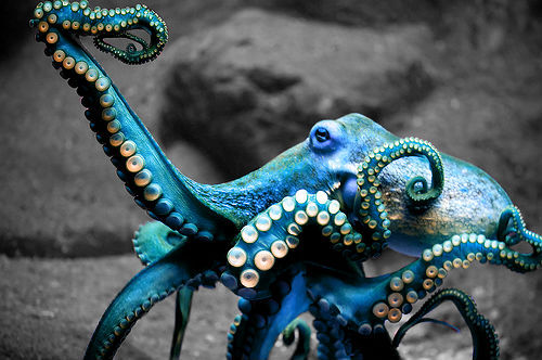 """Tell me, o Octopus, I begs:Is those things arms, or is they legs?I marvel at thee, Octopus -If I were thou, I'd call me 'us.'""  - Ogden Nash"