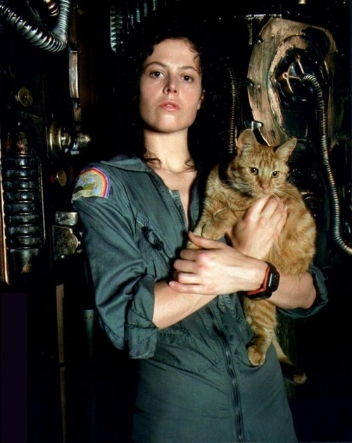 "mysteriousgalaxy:  technicolorowl:  The real hero is Alien is Jonesy the cat.  kitty!  Re-watched Alien last night and when I got home and saw my cat (the bad one), I burst into tears. ""YOU MADE IT!"" I said. Somehow over the course of the movie I had become convinced that an alien ate my cat. Now THAT'S good filmmaking. To be clear, Jiao could not look less like Jonesy if she was trying. I'm just crazy."