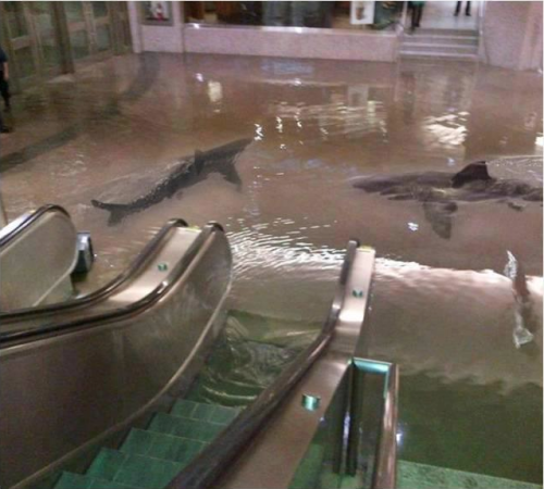 We're at the mall to shop till we- WTF?! OMG! SHARKS!  (The collapse of a shark tank at The Scientific Center in Kuwait.) UPDATE- FAKE! haha