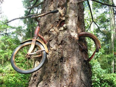 FACT: this was left chained on the tree by a young man during a war in 1914.