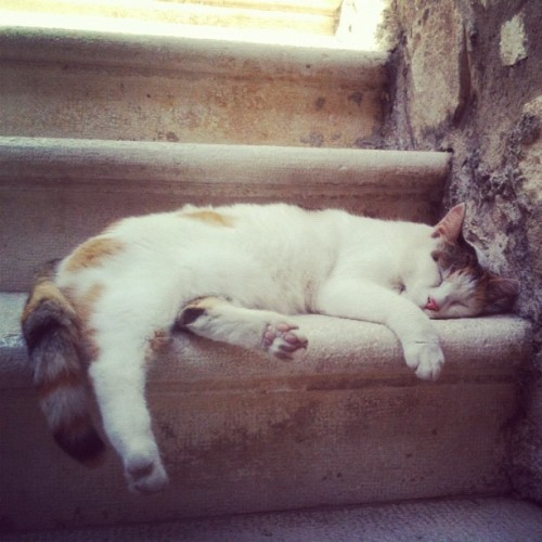 Sleeping #cat, Diocletian's Palace, Split, Croatia (Taken with Instagram)