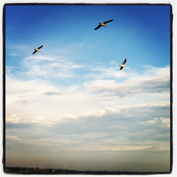Seagulls Rhode Island (Taken with Instagram)