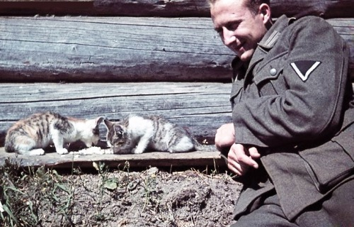 thecolorofwar:  German soldier and cats