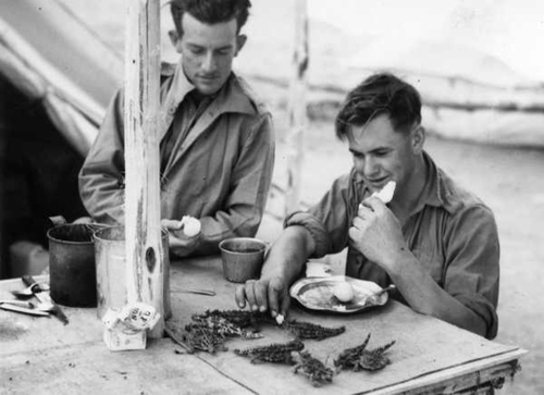 Australian soldiers feeding lizards during World War II
