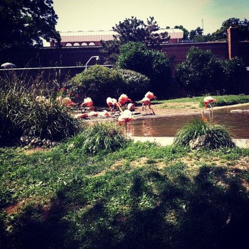 Flamingo! (Taken with Instagram)