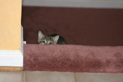 My cat likes to hide behind stairs.