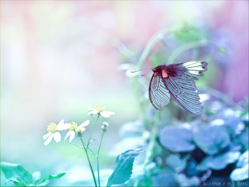 butterfly by ~kimeajam