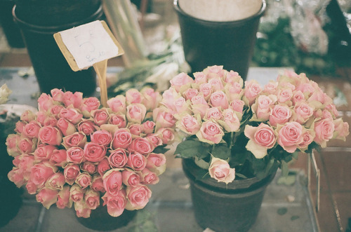 blanchies:  roses are red by whimsical jane on Flickr.