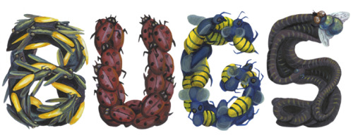 Another type project…BUGS!