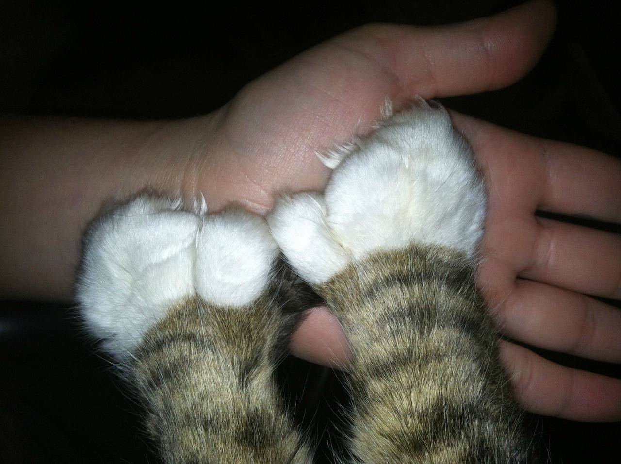 Extra-happy high five with extra-toed cat. Photo via Imgur
