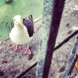 Seagull. This time. He became my little friend for a bit.  (Taken with Instagram)