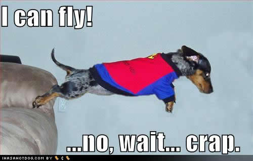 not all weenier dogs can fly.. this is why people think cats are smarter