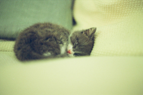 photogenicfelines:  Little Tabitha Furball (by atomicules)
