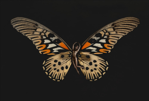 hoodoothatvoodoo:  Carsten Witte From Psyche, The Butterfly Series
