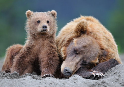 Guarding Mom's sleep by Nikolai Zinoviev