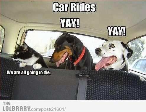Car Rides…Follow this blog for the best new funny pictures every day