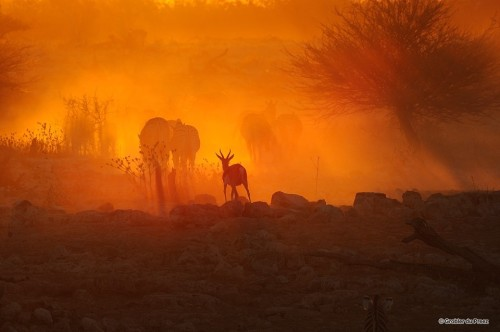 Sunset at the Okaukeujo waterhole, Etosha National Park, Namibia by Grobler du Preez via @PhotoExtract Copyright © All rights reserved More Top Google+ Photos at photoextract.com