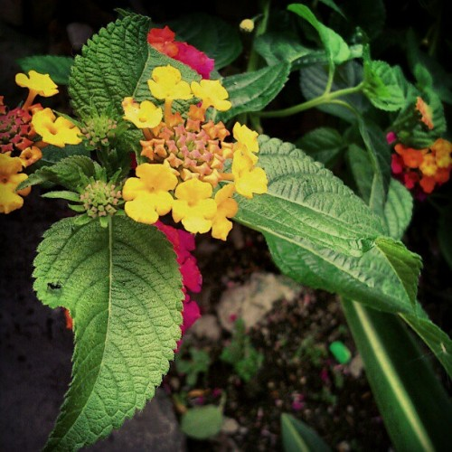 Pretty flowers (Taken with Instagram)