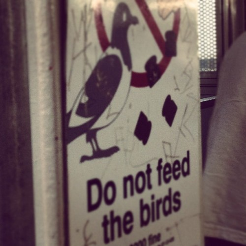 Don't give the pigeons toast! #cta #clarkandlake #summer12 #chicago @odalex32  (Taken with Instagram)