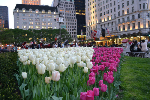 fabulouseverything:  like who wouldn't love tulipssssssssss
