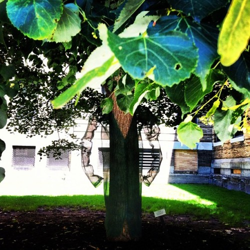 #treeman  (Taken with Instagram at The Quad @ Simmons College)