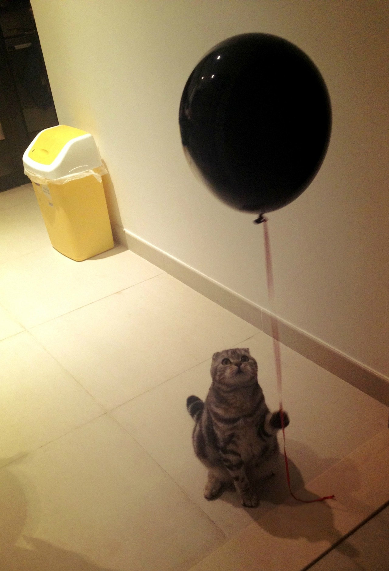 melmyfinger:  Awkward cat and awkward balloon.