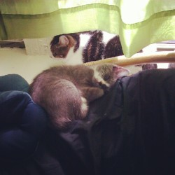 They made peace #cats  (Taken with Instagram)