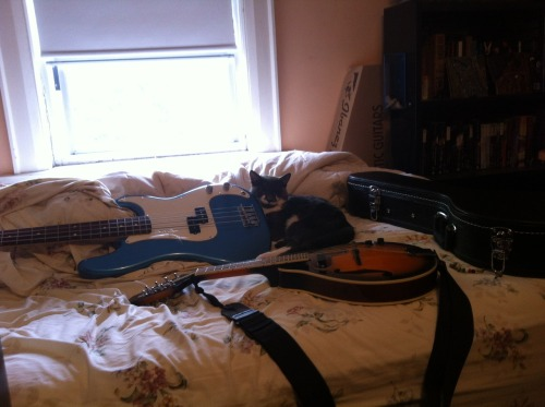 frogber:  Chewie is ready to jam So i bought a mandolin yesterday