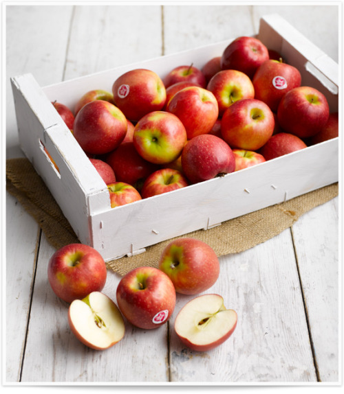thereluctantrawfoodist:  For sharing! x makemesweatx:  Pink Lady Apples