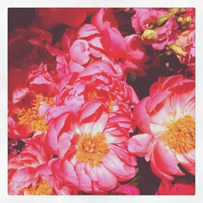 #peonie #flowers #spring #pink  (Taken with Instagram at Happy place with unicorns and rainbows)