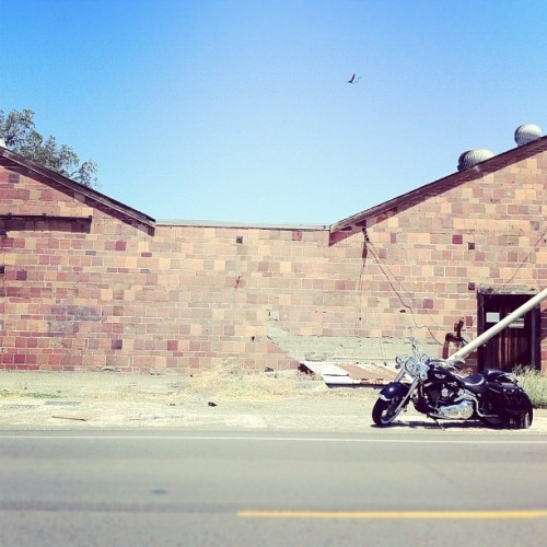 Summer days.  #harley (Taken with Instagram)