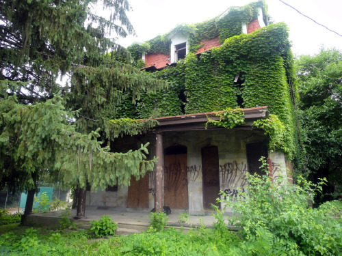 Ivy-Covered Twin, Hunting Park, North Philly