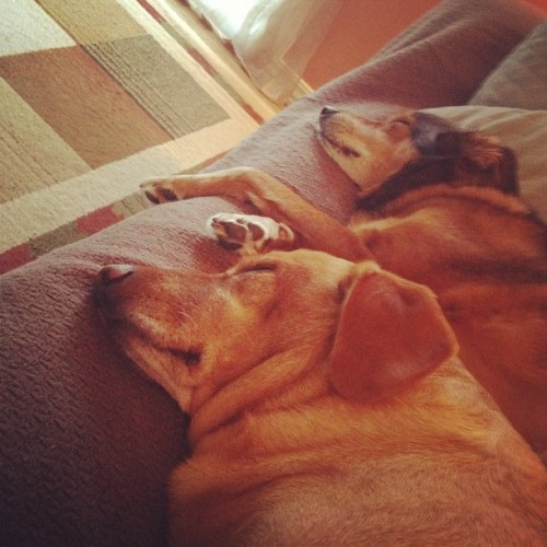 Pups that nap together stay together! (Taken with Instagram)