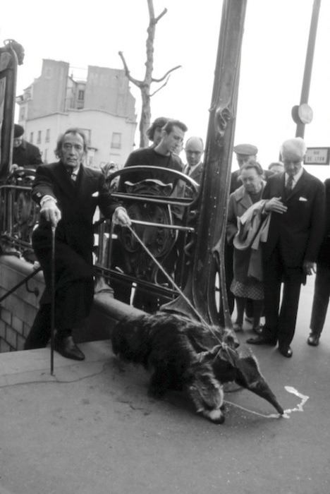 skinned-teen:  Salvador Dali taking his anteater for a walk.