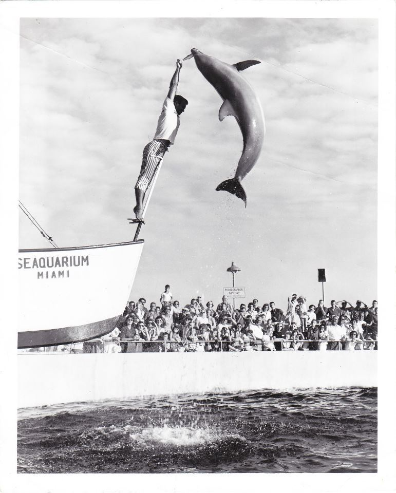 oldflorida:  Time to jump, it's Monday.  I LOVE THE MIAMI SEAQUARIUM
