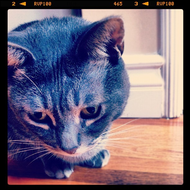 Hey bubba chub. I missed you too, Cat Baloue. (Taken with Instagram at Our humble abode )