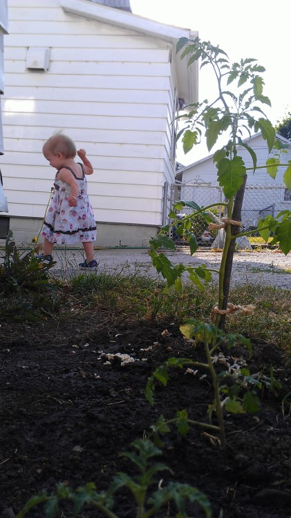 That's my wee one and the tiny urban garden that I have planted in the back yard. I started my garden, because my dear friend, Jane, dropped off three cherry tomato plants. Jane brought the plants over because she is 8 months pregnant & couldn't stand to dig another hole! She's so funny and sweet! I'm really glad that she thought of me, because I have been bit by the gardening bug again. (Perhaps, I shouldn't use the word bug and garden in the same sentence! lol! Is that bad mojojo for the garden?!) In addition to the tomato plants, I have planted sugar snap peas & cucumbers as well. I'm pretty stoked! I love having an excuse to get my hands dirty! Are you gardening this summer? -nk