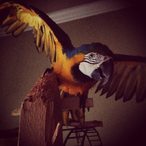 He's taunting me. #bird #taunt #comeatmebro (Taken with Instagram)