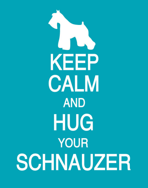 only-schnauzers:  Hug your schnauzer!  EVERYDAY!!