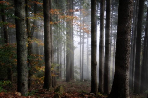 woodendreams:  (by Philippe Sainte-Laudy)