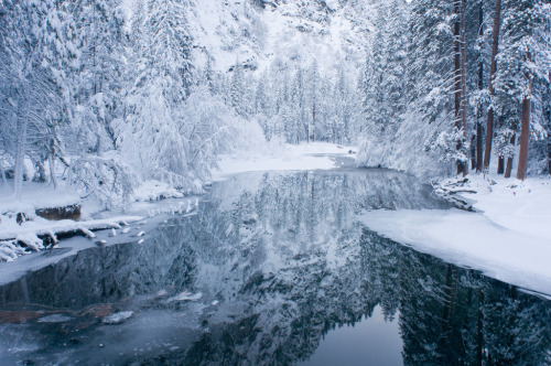 woodendreams:  (by Molly Wassenaar)