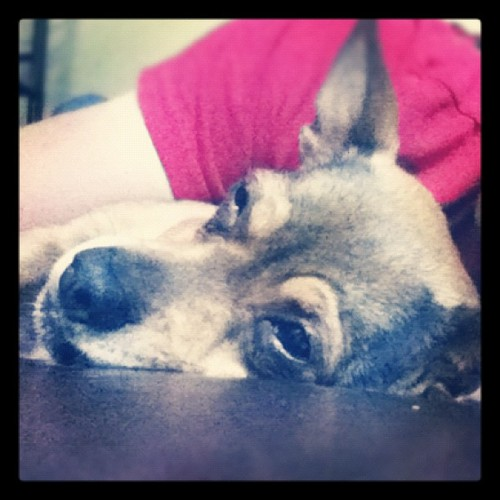 Sleepy poncho. #puppy #dog #nap (Taken with Instagram)