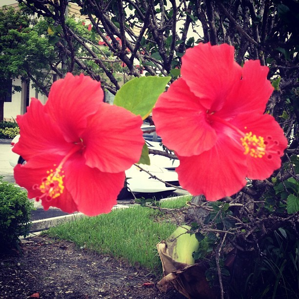 #pretty #flowers #fortlauderdale #florida (Taken with Instagram)