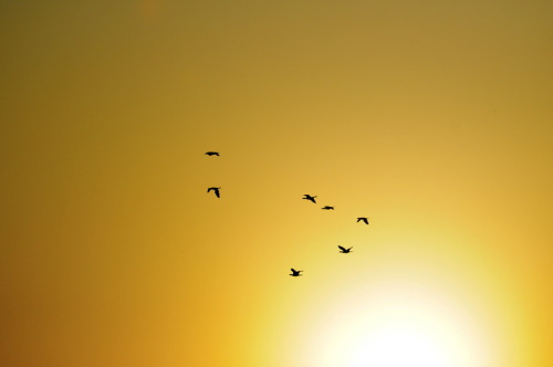 "nakamagome2:  ""Sunrise flight"" by Hermes S"