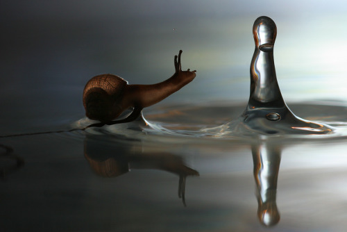 "nakamagome2:  ""Snail and the raindrop"" by Vadim Trunov"