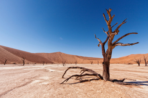 Deadvlei, Sossusvlei, Namibia by Ramin Hossaini on Flickr.