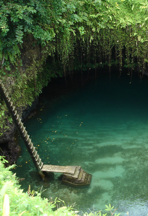 purified-souls:  ∞ CLICK HERE FOR A TROPICAL BLOG :) ∞